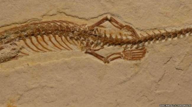 113 milyon yıllık dört bacaklı yılan fosili bulundu